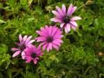 pflanzen-blumen/12224/blumen-am-wegrand-i Blumen am Wegrand I